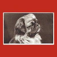 Photochrom Company Vintage Postcard of Pekingese Dog