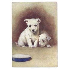 Lightly Embossed Advertising Postcard Westie Puppies De Reszke Cigarettes