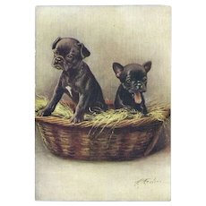 Embossed Advertising Postcard of French Bulldog Puppies for De Reszke Cigarettes
