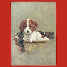 Small Embossed Basset Hound Puppy Advertising Postcard