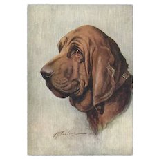 Embossed Cigarette Advertising Postcard of Bloodhound Dog