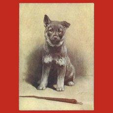 Advertising Postcard of Elkhound Dog for De Reszke Cigarettes