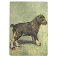 Embossed Cigarette Advertising Postcard of Schnauzer Dog