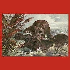F. Perlberg Vintage Postcard of Hippos in Water