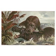 F. Perlberg Vintage Postcard of Hippos in Water
