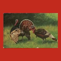 Alfred Schonian Undivided German Postcard of Two Turkeys