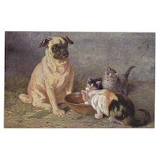 M. Stacks 1902 Postcard of Pug Dog with Kittens