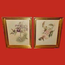 John Gould Pair of Hummingbird Prints