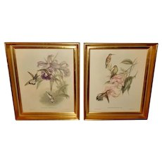 John Gould Pair of Hummingbird Prints