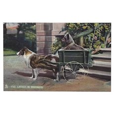 Raphael Tuck Photochrome Postcard of Collie Pulling Cart