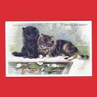 Mabel Gear Vintage Postcard of Persian and Tabby Kittens