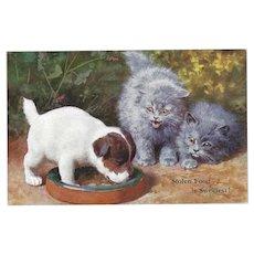 Vintage British Postcard of Puppy Eating Kittens Food