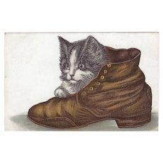Vintage Embossed 1909 Postcard of Cute Kitten in a Shoe