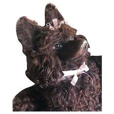 Beautiful Dear Lou Lou dog brown