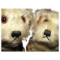Pair of Early Vintage Steiff Molly Dogs - Precious!