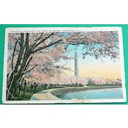 1930 Washington Monument & Cherry Blossoms Washington D. C.