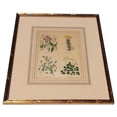 Pair Of Lovely Framed Hand Colored English 19th Century Botanicals