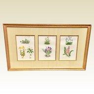 19th Century Set Of Three English Botanical Framed Prints
