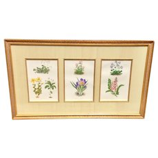 19th Century Set Of Three English Botanical Framed Prints