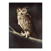 Oil Painting - Portrait of a Great Horned Owl by Photo Realism Painter Arne Charles Besser, American (born 1935)