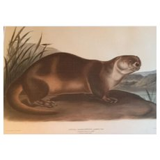 Antique 19th century Audubon Large Folio Hand Colored Lithograph Canada Otter Philadelphia 1847 Plate 122