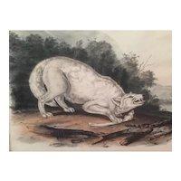 Antique 19th century John James Audubon Large Folio Hand Colored Lithograph White American Wolf Philadelphia 1845 Plate 72
