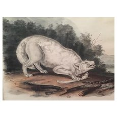 Antique 19th century John James Audubon Large Folio Hand Colored Lithograph White American Wolf Philadelphia 1845 Plate 72