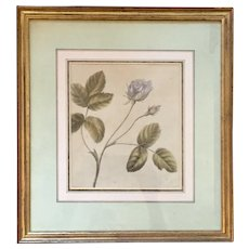 Antique 18th century English Botanical Watercolor Painting by Lady Charlotte Murray 1785 - A Rose - Clarendon Gallery London