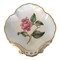 Antique early 19th century English George III Derby Porcelain Botanical Shell Shape Dish Plate William Quaker Pegg