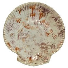 Antique 19th century Wedgwood Conchology Pink Moonlight Luster Pearlware Scallop Sea Shell Plate