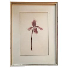 Watercolor Botanical Painting of a Lady Slipper Orchid 1940's