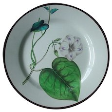 Antique 18th century Swansea Creamware Pearlware Botanical Plate 1800