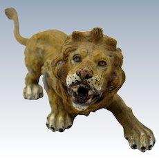 Antique Cold Painted Vienna Bronze LARGE Lion
