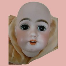 13 In. Cir. Simon & Halbig Bisque Head (Only), Mold #1009, No Damage