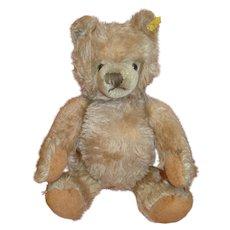 15 Inch Steiff Teddy Bear, Carmel Colored, Silver Button, Ear Tag