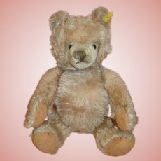 15 Inch Steiff Teddy Bear, Carmel Colored, Silver Button, Ear Tag
