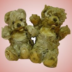 Pair of German Steiff Zotty Bears with Signs of Affection
