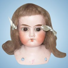 3.5 Inch Bisque Shoulder Head Incised Lilly Original Ash Brown Mohair Wig Pate Brown Paper Weight Eyes