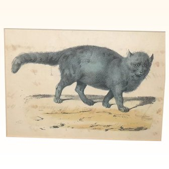 19th Century Folk Art Ink and Water Color Study of a Gray Cat