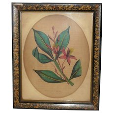 19th Century Hand Tinted Botanical Print Quassia Amara Old 11.5 x 8.25 Inch Marbled Frame