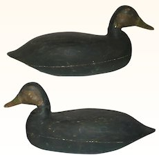 19th Century NJ Hollow Carved Harry V Shourds Black Duck Working Decoy Old Paint Tack Eyes
