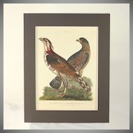 "Hand colored engraving ""The doubtful Hawk, tufted Goshawk"" dated 1805"