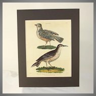 "Hand colored engraving "" The Flapping Lark and the Sirli, or African Lark"" dated 1807"