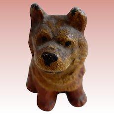 Miniature Norwich  Terrier