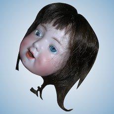 """Vintage Human Hair wig Brunette 10-11"""" HC"""