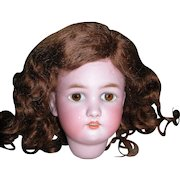 "Global Brownish Red Mohair wig for bisque dolls 9"" head circumference"