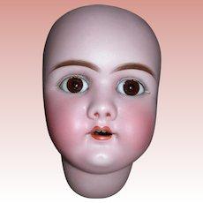 """12"""" HC #109 Dep Handwerck Head"""