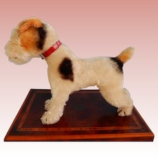 Handsome 9 Inch Steiff Fox Terrier on hold for M.