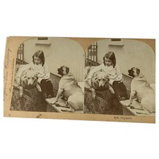 Girl Playing With Her Dogs Stereoview Card By Keystone View Company