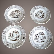 Set Of 8 Brown Transferware Butter Pats